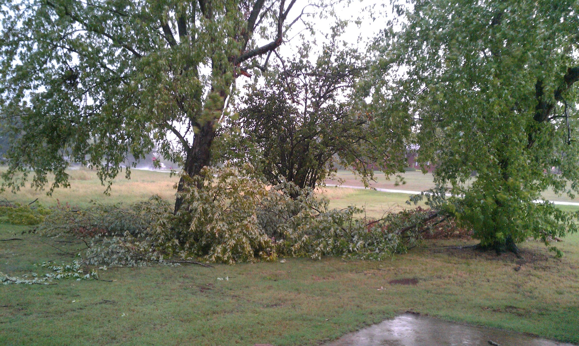 Tree limbs down in Greenwood