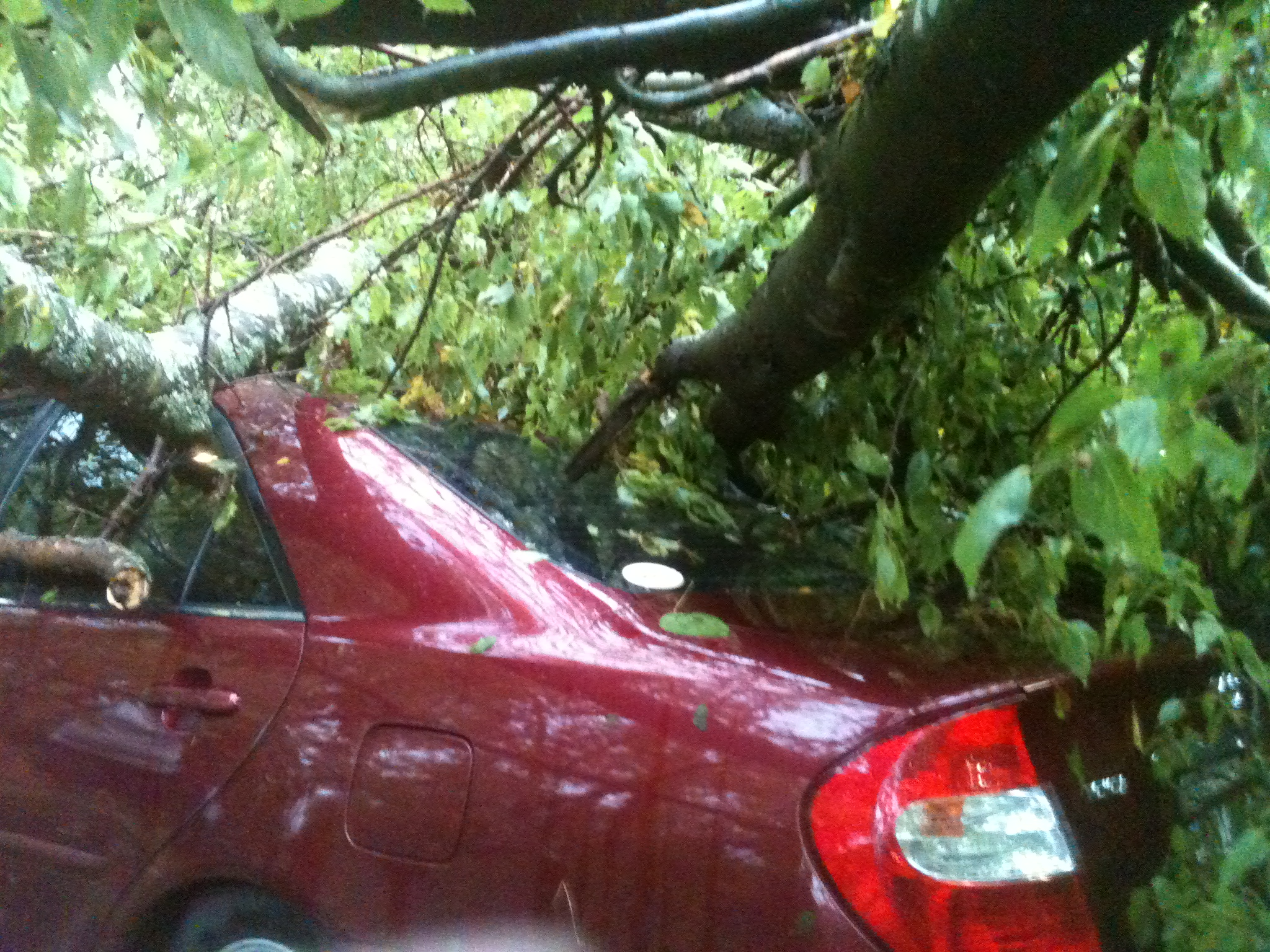 Poteau Storm Damage:  Car under 3 trees