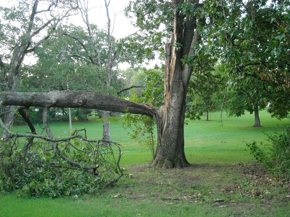 A tree split in half after the storm last night in front of my house.