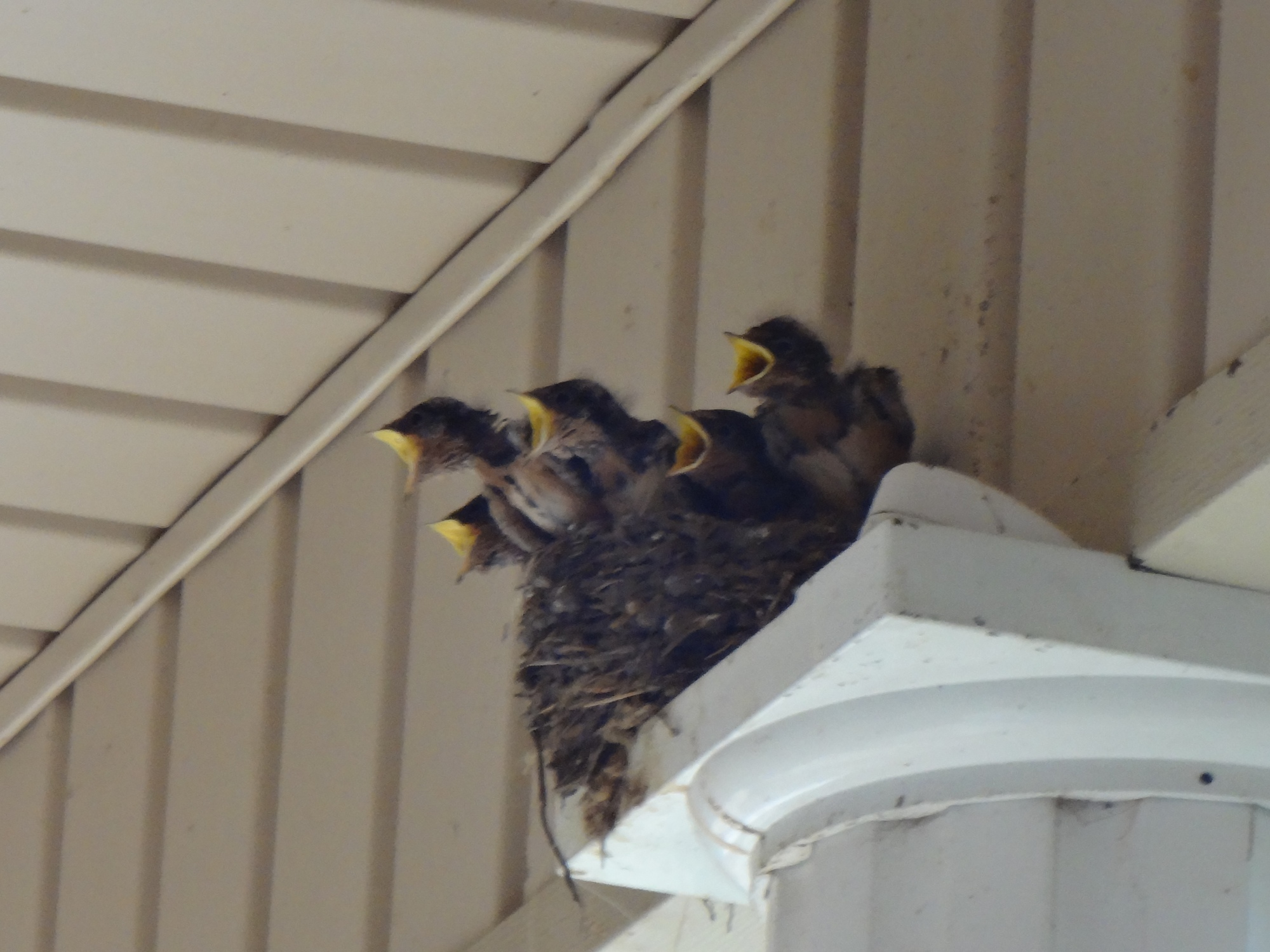 baby birds from our back porch