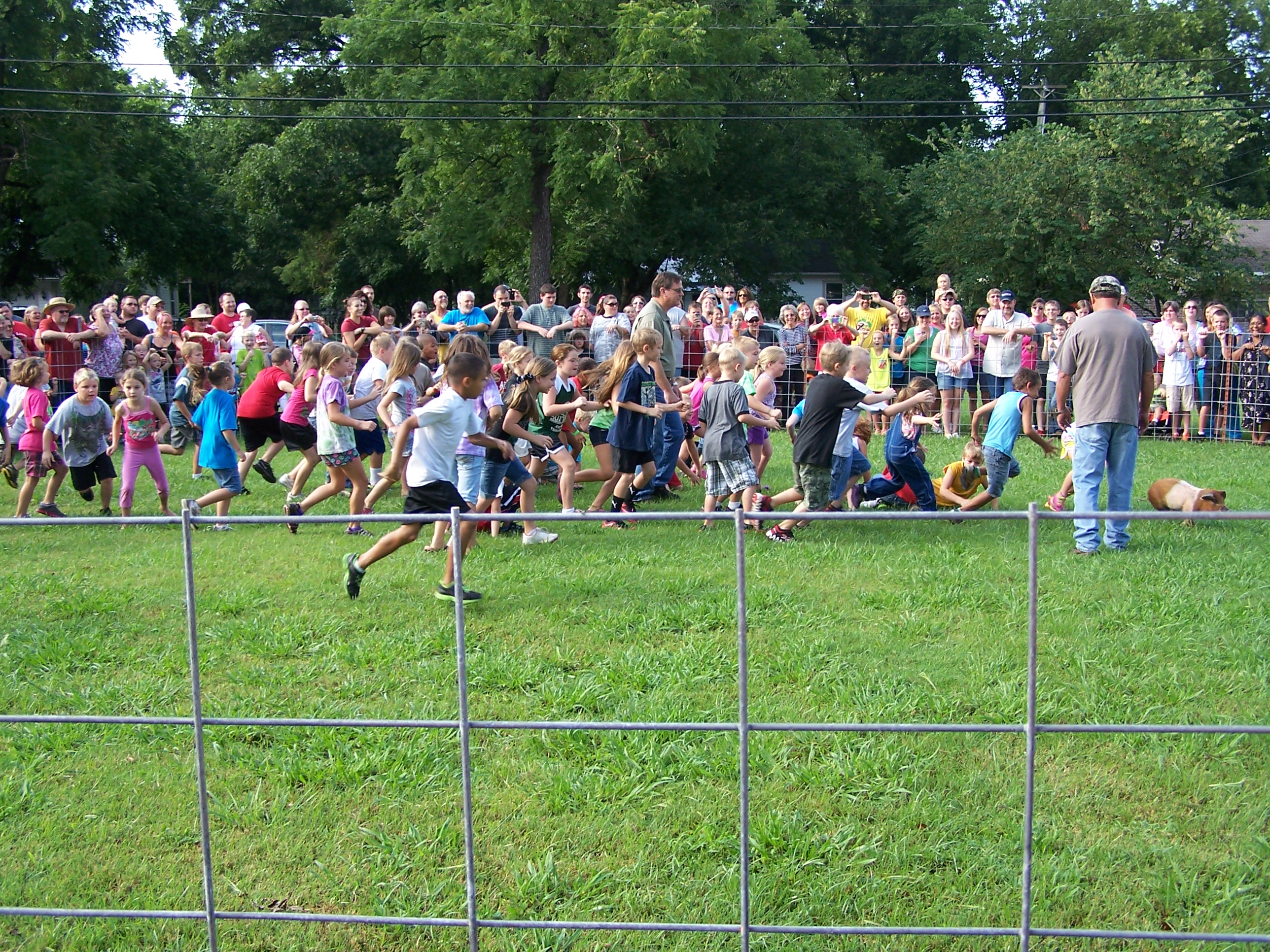 Kids trying to caught a gresed pig-- took by Marilyn Cowell Clarksville