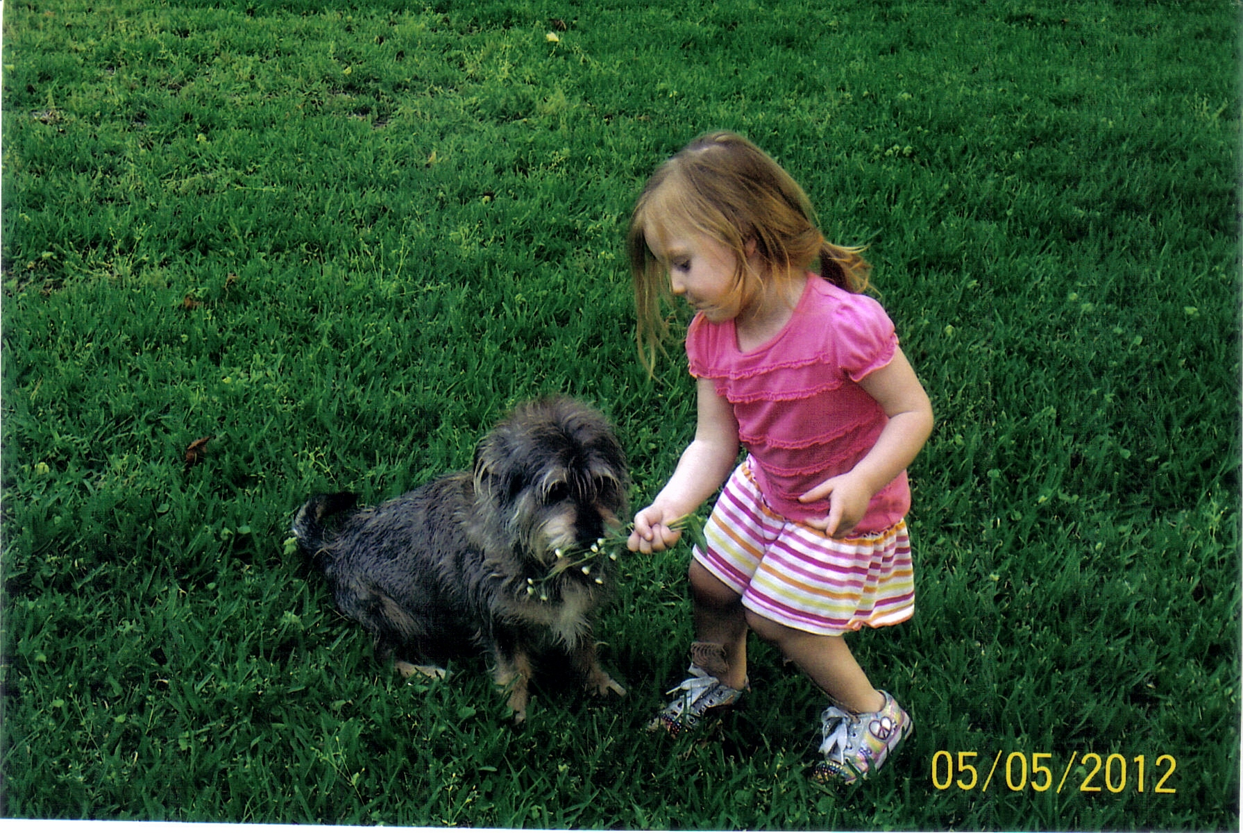 My Granddaughter Sophie sharing flowers with our dog Pepper.