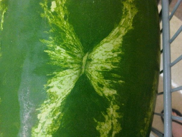 Butterfly print on watermelon - Malloree Butler