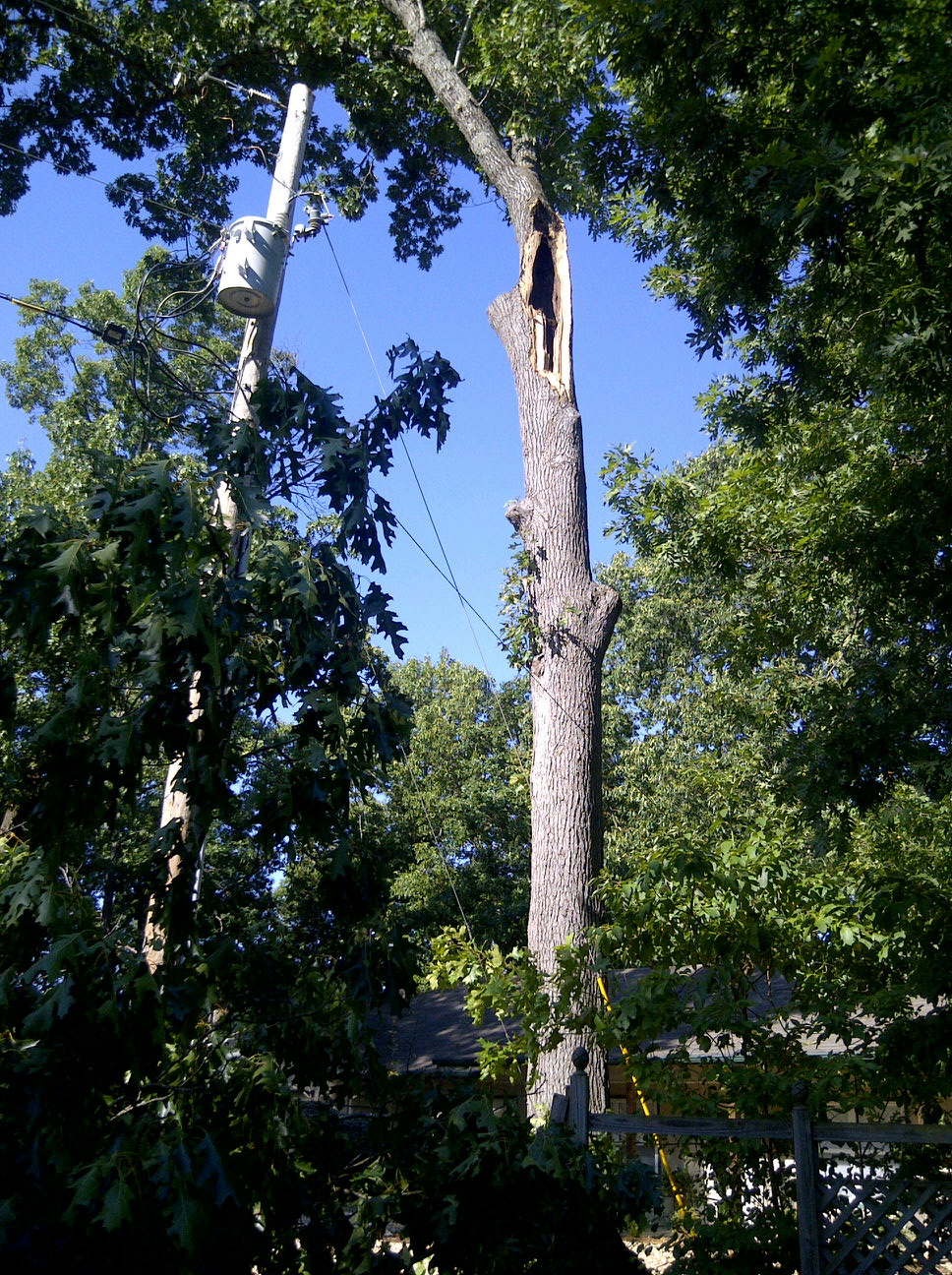 Bella Vista Storm Damage - Brown's Tree Care