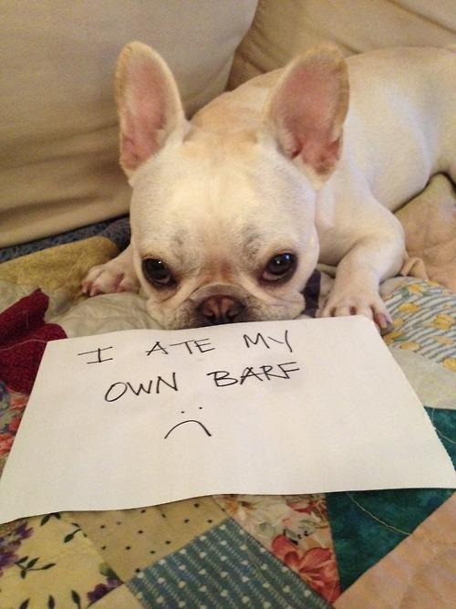 http://dog-shaming.com/