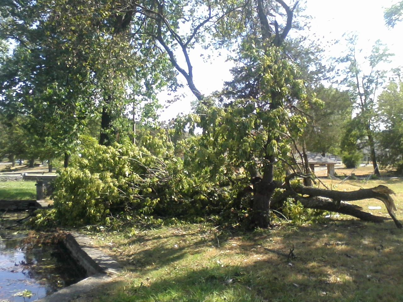Sulphur Springs Storm Damage - Brown's Tree Care