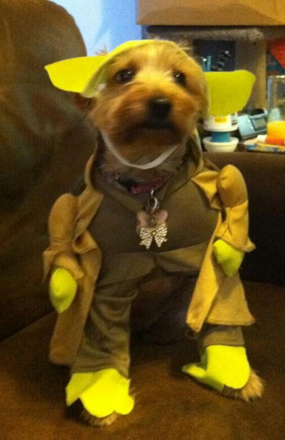Yoda she is.....