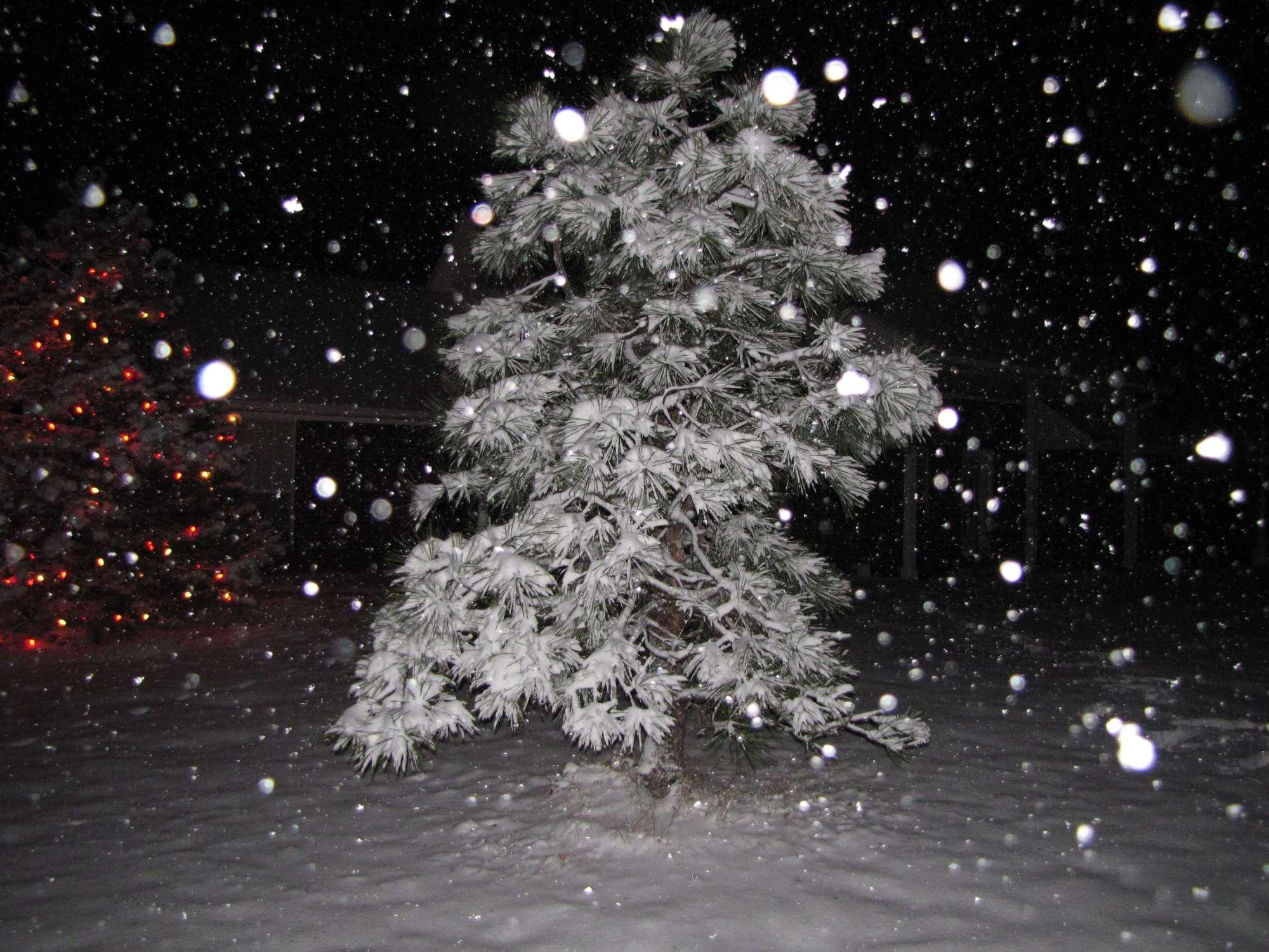 Pine Tree Christmas 2012
