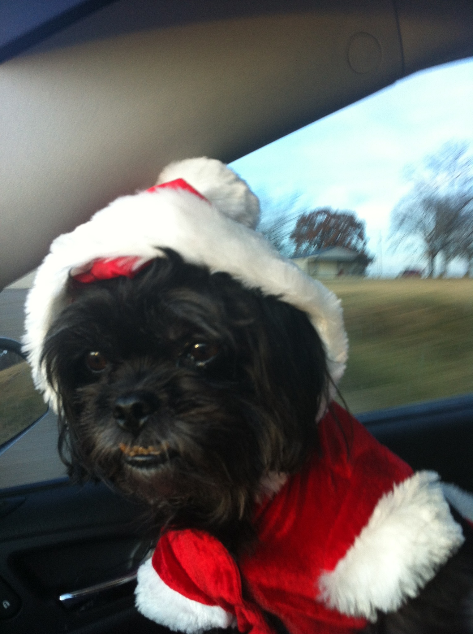 Gizmo Dressed as Santa  Shelley Schluterman, Subiaco AR