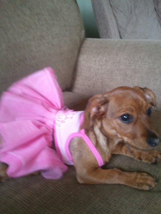 Lola in her tutu