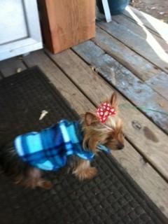 Misty Barnett Dog