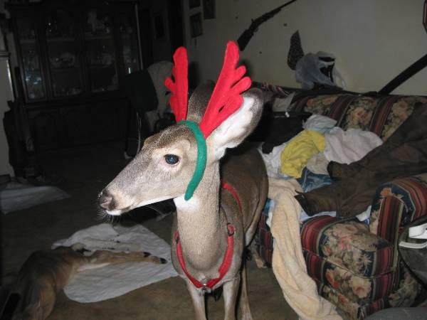 Pet Deer Bambi Jame Kaelin