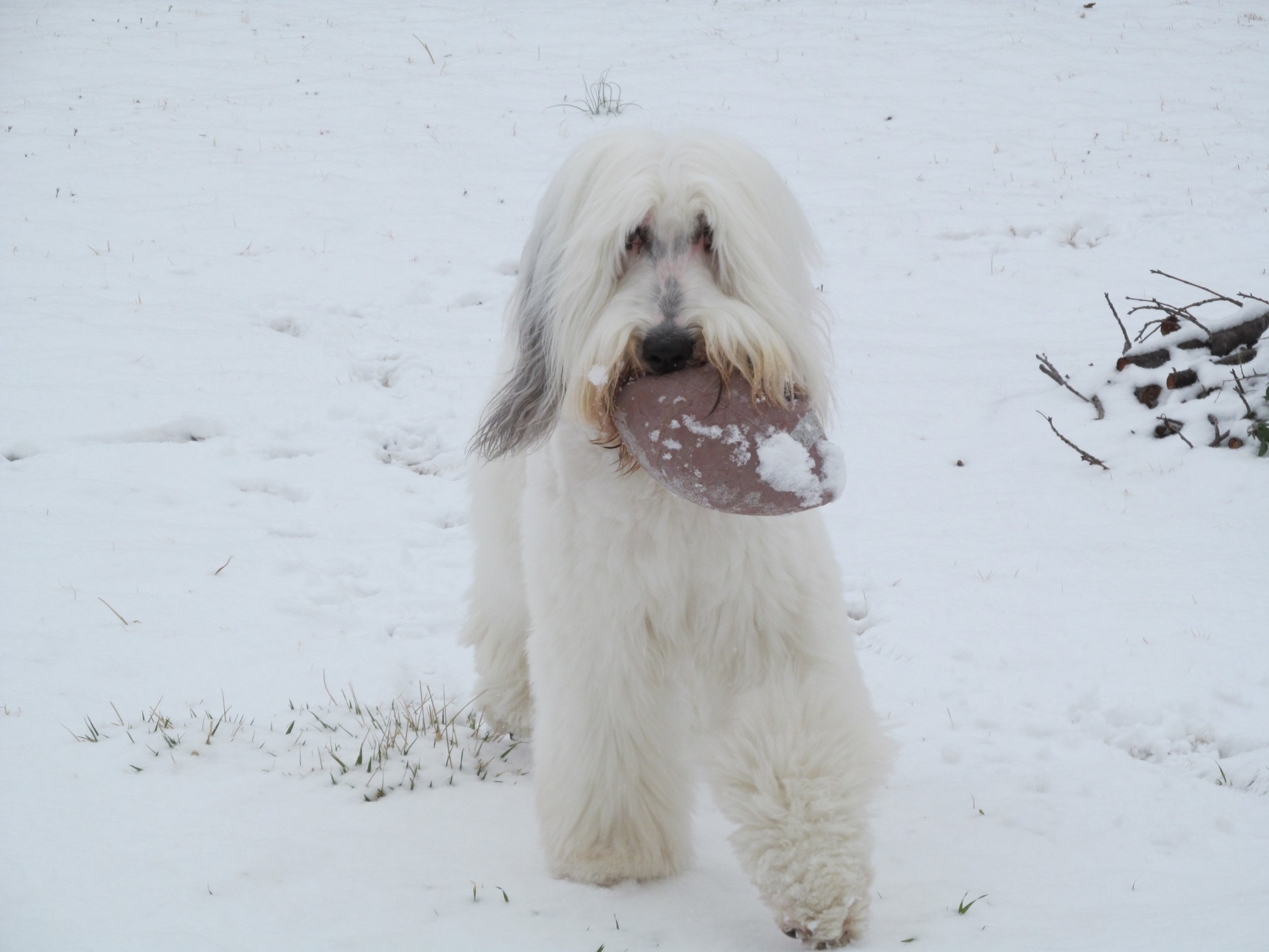 Jazz loves to play football, even in the snow!