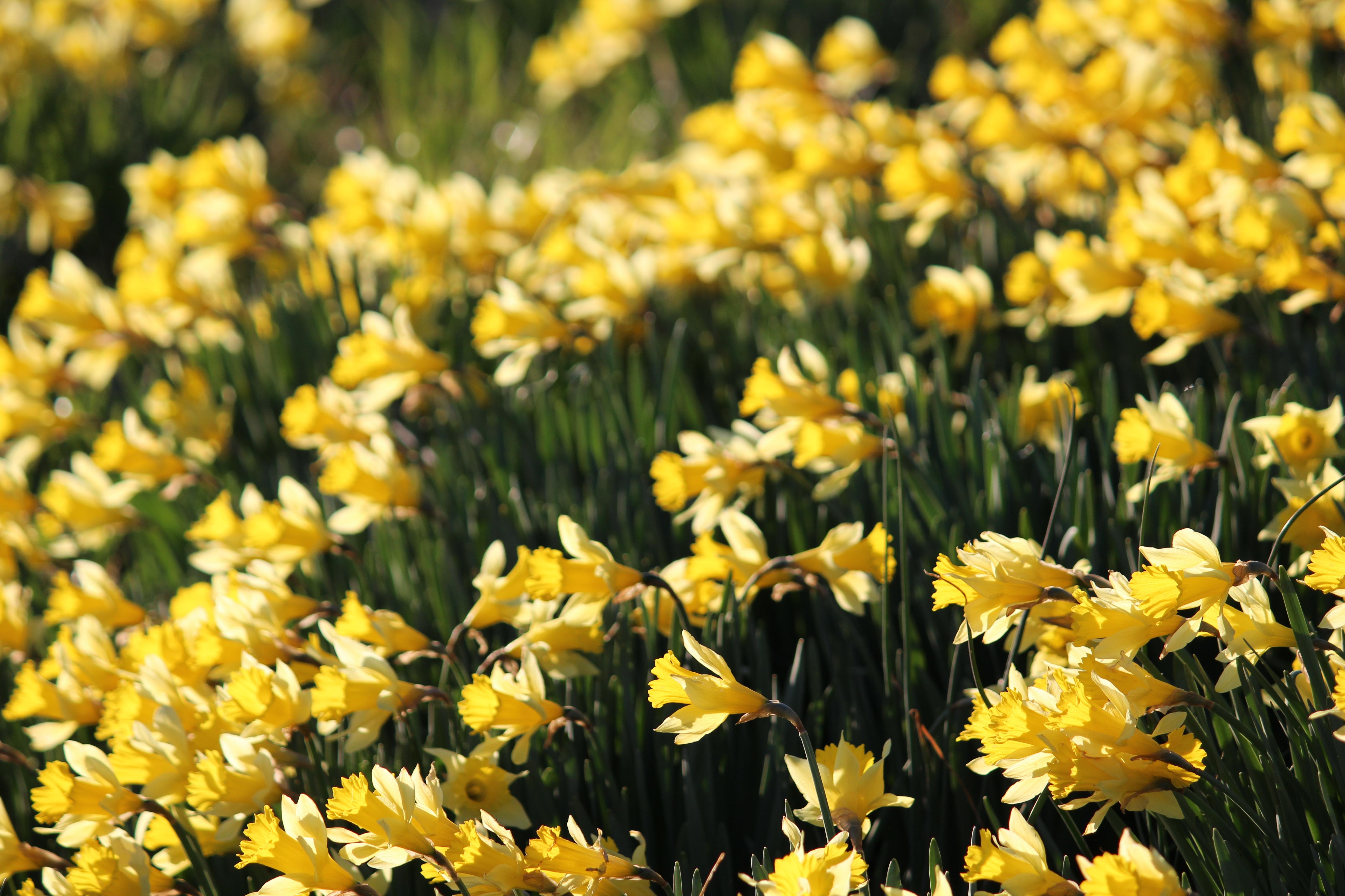 Spring Flowers in Clarksville AR