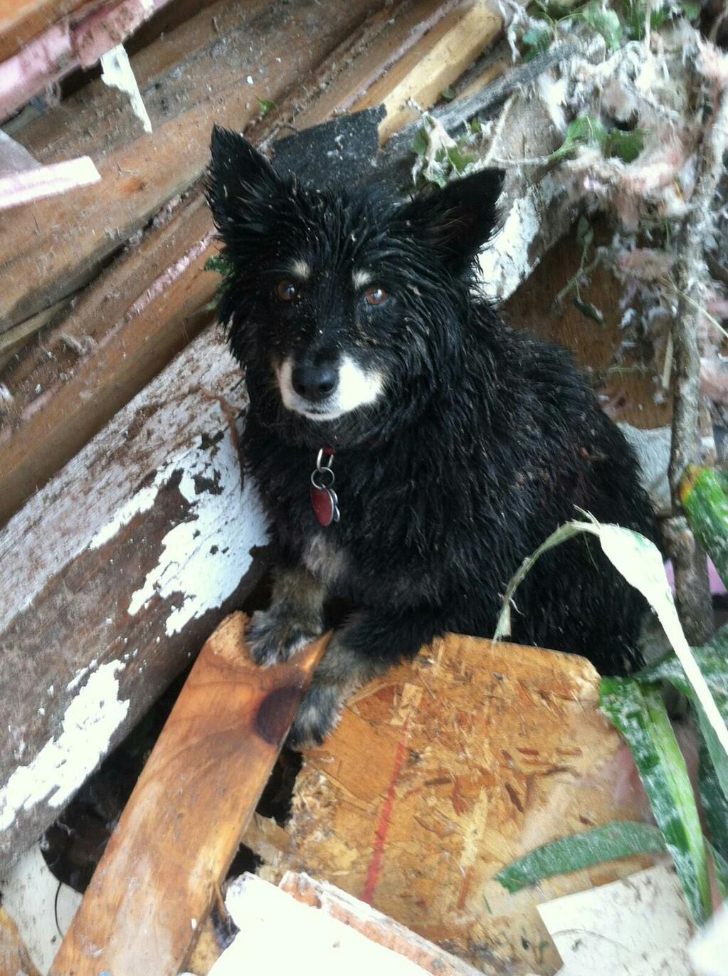 Dog survives Moore, OK tornado. Oklahoma county Sheriff's tweet: Scared, but this little pup survived.