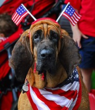4th-of-july-dog-400x464