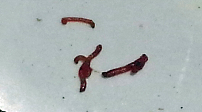 redworms