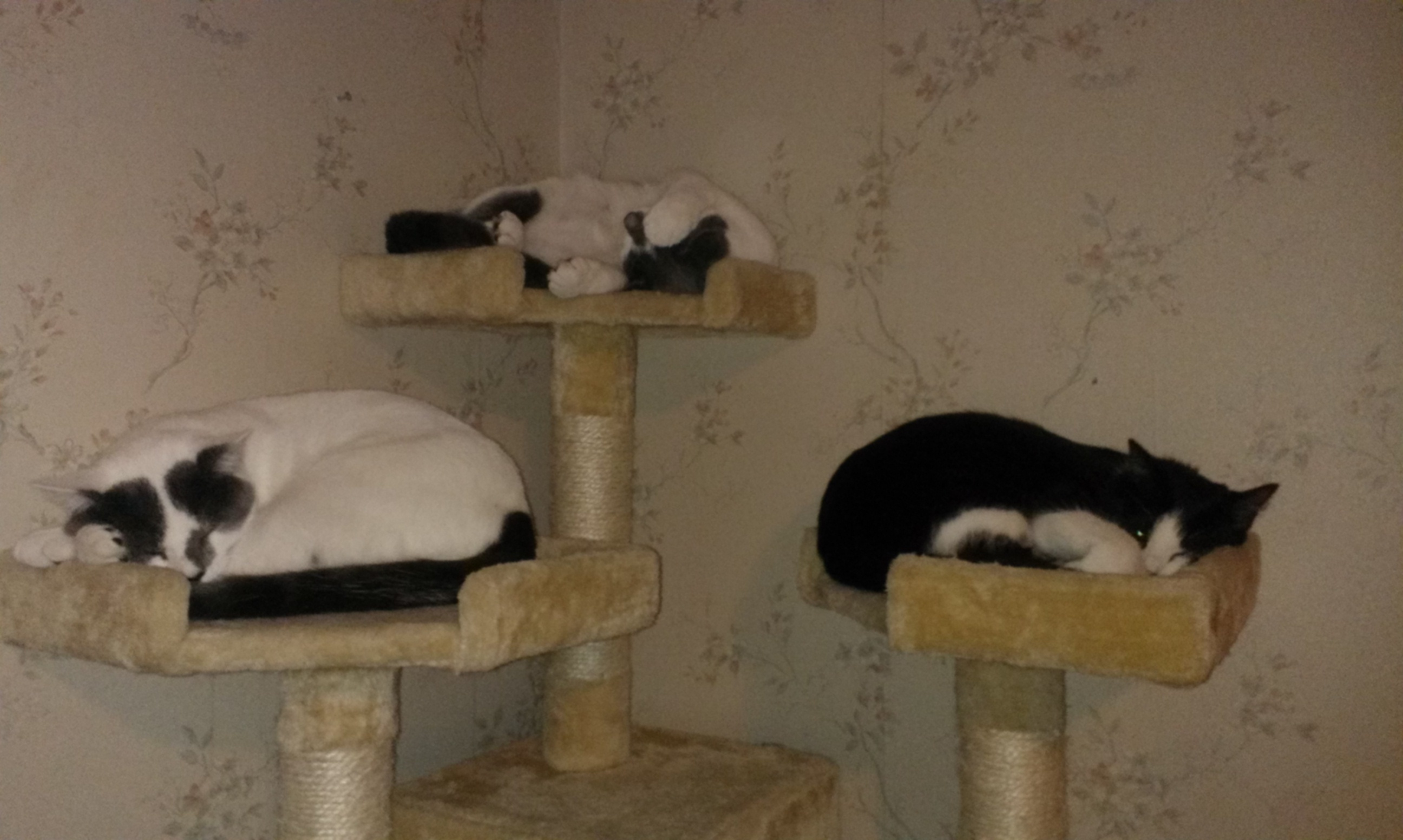 left to right zeus lilian and wiskers