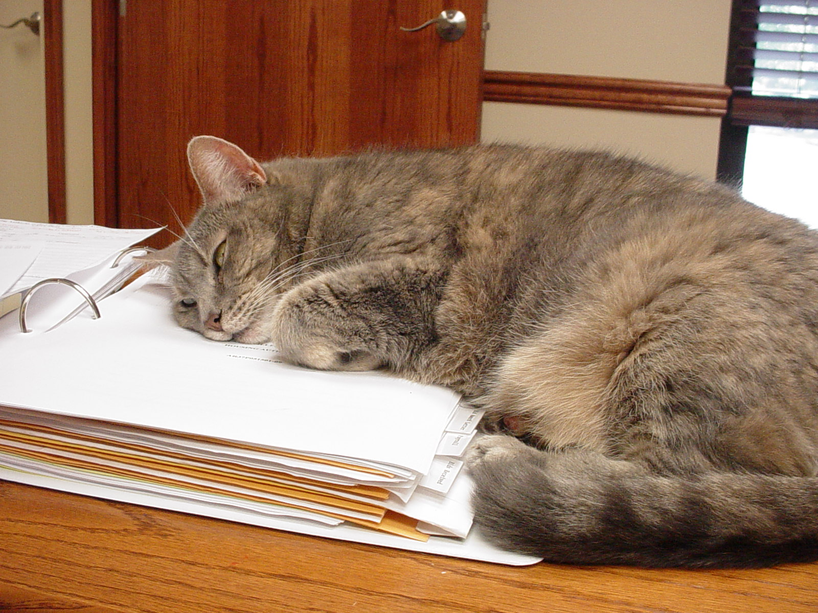 Gracie, office cat, working hard!