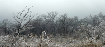 Ice Storm picture from crippling 2009 Springdale Ice Storm iPIX: Melissa Jones