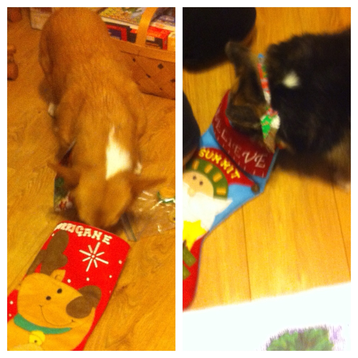 Summit and Hurricane opening their stockings, Fort Smith