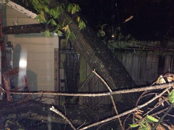 Tree Downed in Fort Smith