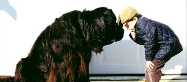 Newfoundland dogs can grow to be very large. Photo courtesy of KFMB.