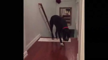 pit bull afraid of doorways