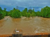 Flooding on Horsehead Creek in Johnson Co taken by Billie Nichols.