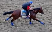 American Pharoah goes for the second leg of the Triple Crown. (Getty Images)