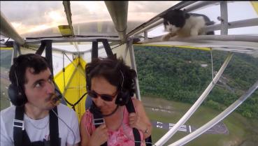 cat-plane-ride