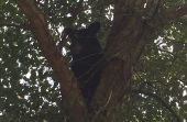 greenwood bear3