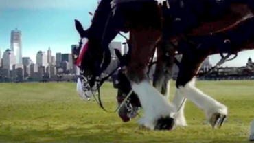 clydesdale-bow2