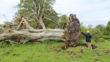Uprooted Tree Reveals Violent Death