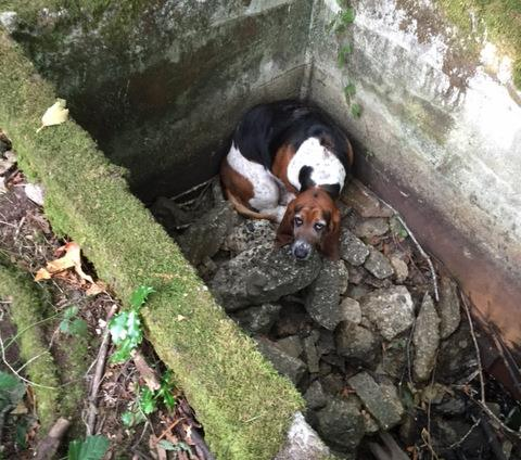 Courtesy: Vashon Island Pet Protectors