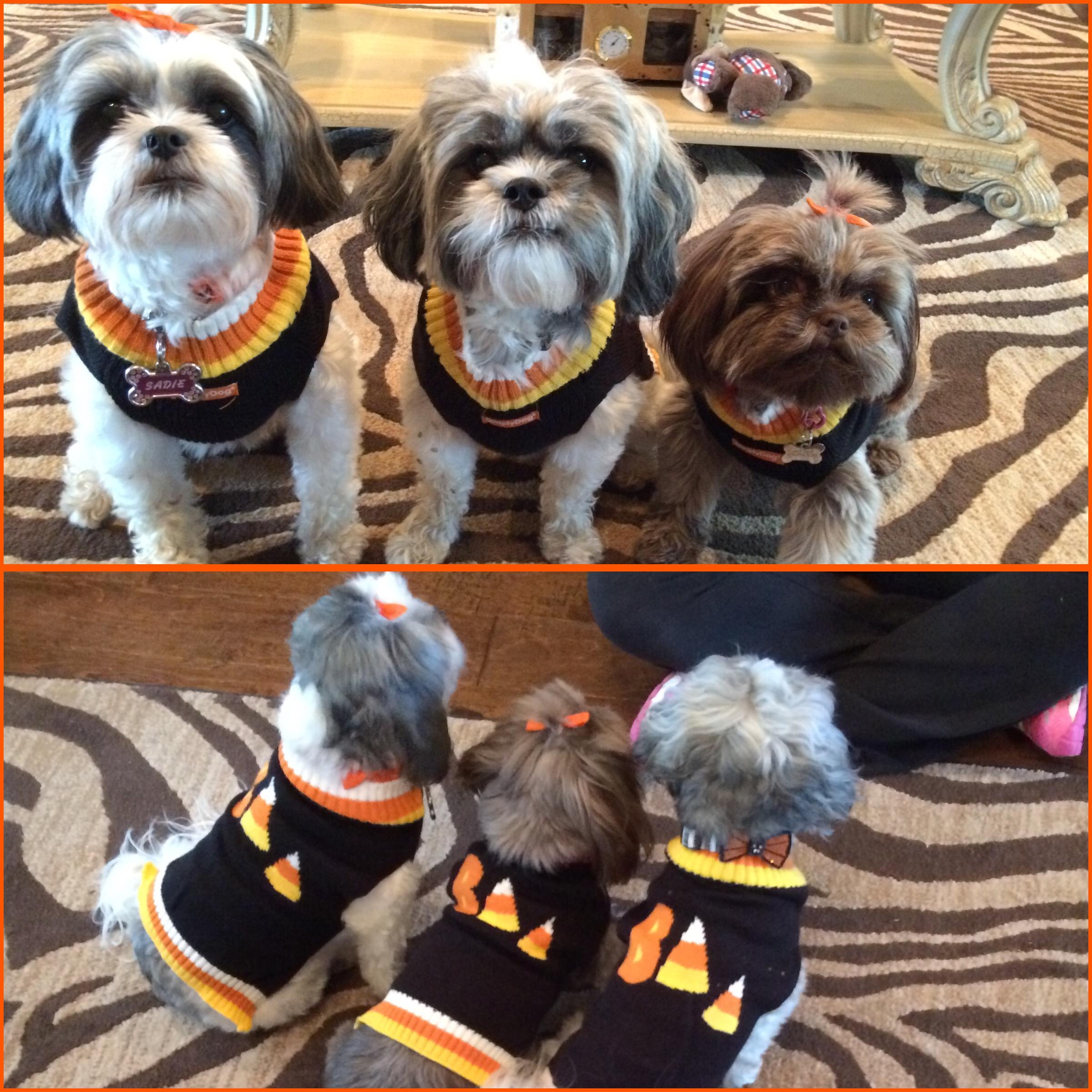 Sadie, Ziggy and Gigi