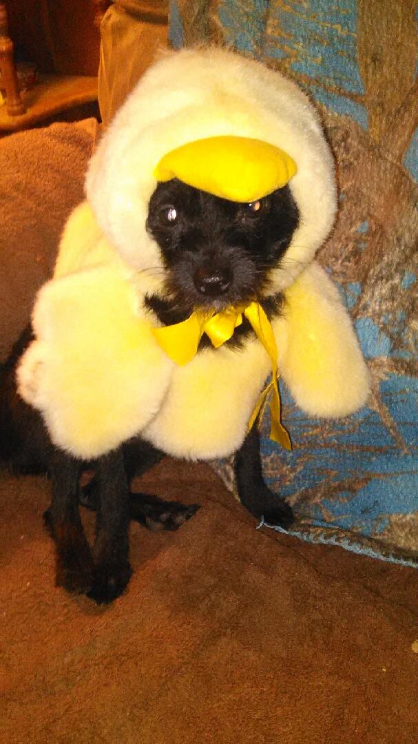 Jr. in his duck costume