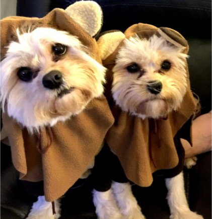 This is a photo of my two little dogs. They are sisters. They look adorable, don't you agree?
