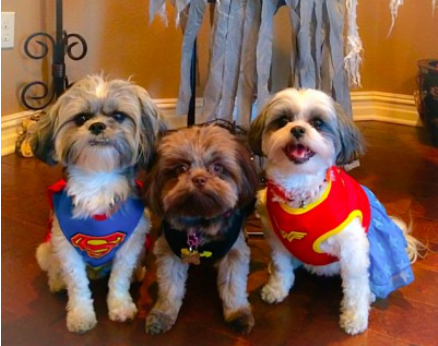 Superhero pups: Ziggy, Gigi and Sadie.Picture submitted by Brandy Sheppard.