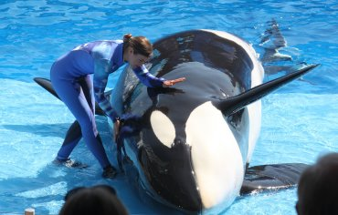 SeaWorld's Killer Whale show 'One World' premiered in 2011. The show was unique as trainers did not enter the water with the whales.