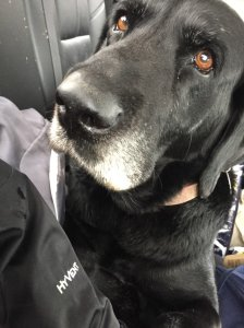 Craig Strickland's dog, Sam (Courtesy: Twitter)