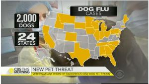 Dog Flu Map