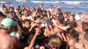 argentina dolphin