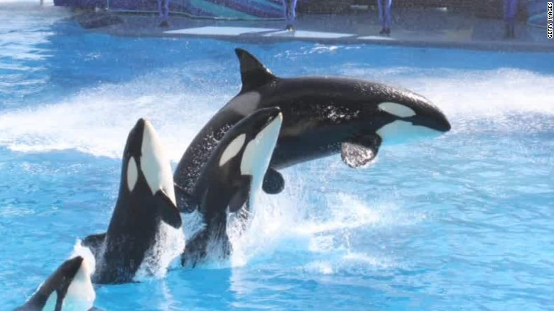 151109183947-seaworld-no-more-killer-whale-shows-blackfish-co-writer-intv-walker-cnn-today-00033325-exlarge-tease1