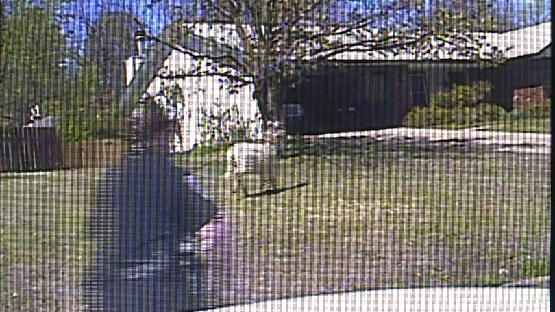 fayetteville donkey on the loose