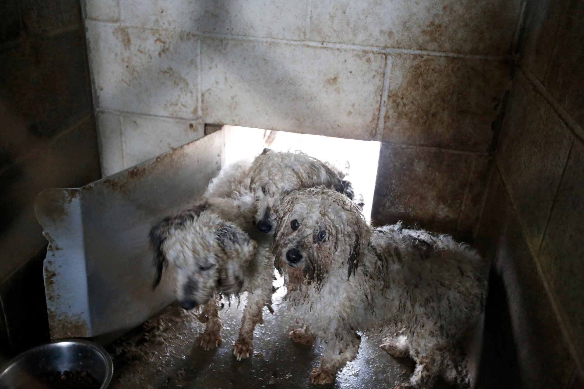 Small dogs huddle in a muddy pen during an animal rescue, Thursday, March 3, 2016, in Madison Co., Arkansas. (Brandon Wade/AP Images for The Humane Society of the United States)