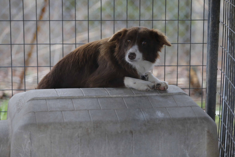 dog rescue arkansas