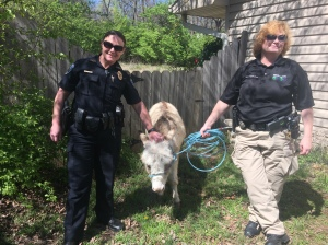 officer with donkey