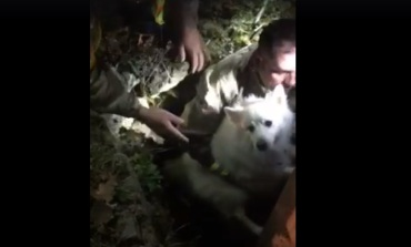 Westville Firefighters rescue dog from well