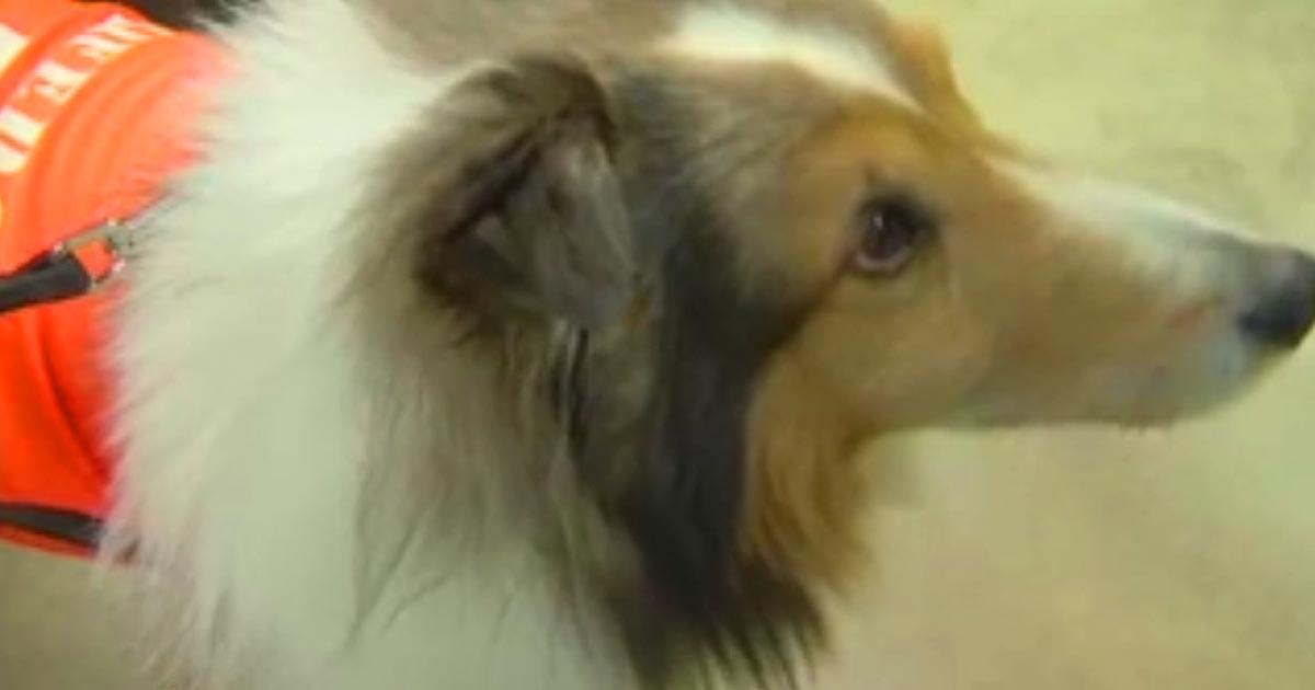 dog1-1